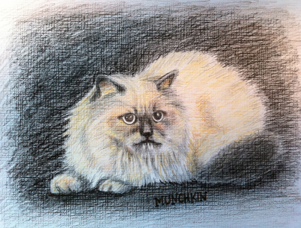 Deb's Cat, colored pencil