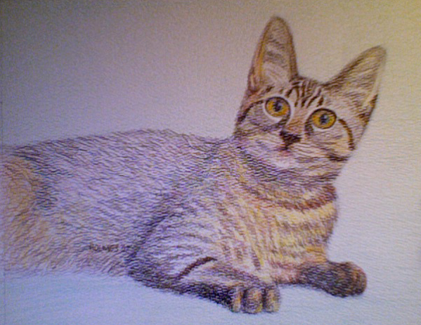 Linda Lee's Cat, colored pencil